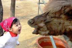 да спориш с магаре (нищо, че е пони) не е много умно