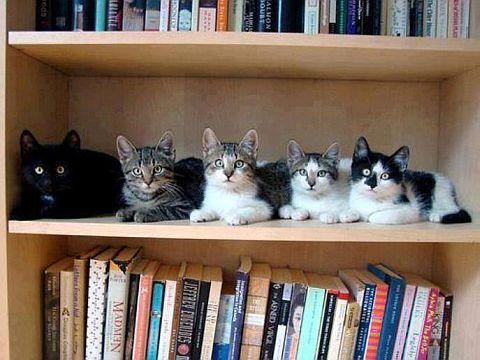 bibliokoteka
